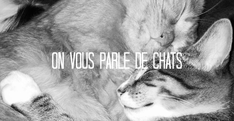 chat animaux love pets