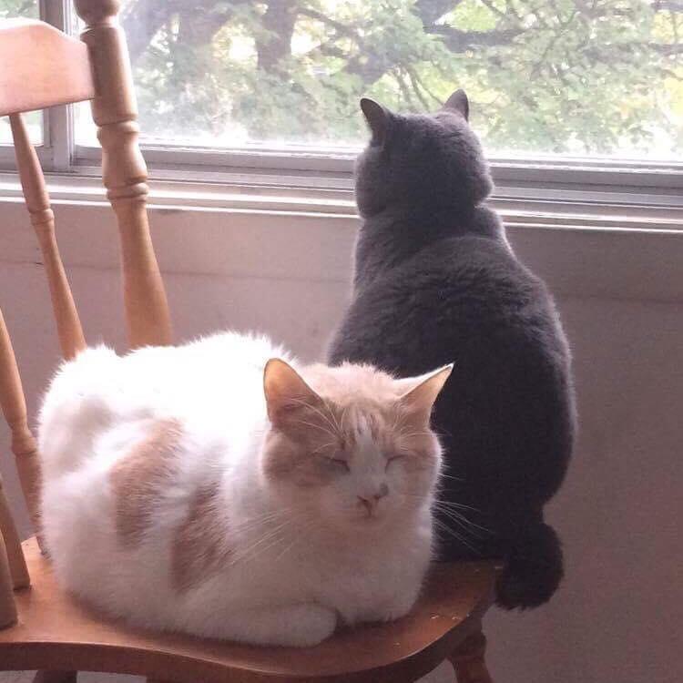 On vous parle de chat, les chats à Dominique